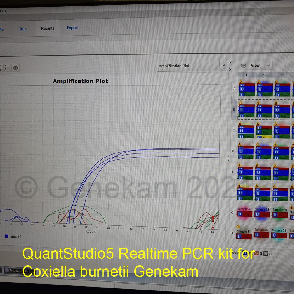 Genekam_QuantStudio5_Coxiella_burnetii